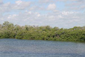 mangrove 2 van Barry van Strien