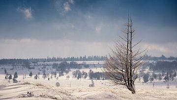 Hoge Venen winter von Wim van D
