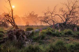 Morgennebel auf Kampina von Esmeralda holman