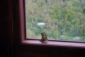 Vlinder achter glas van Martijn Stoppels