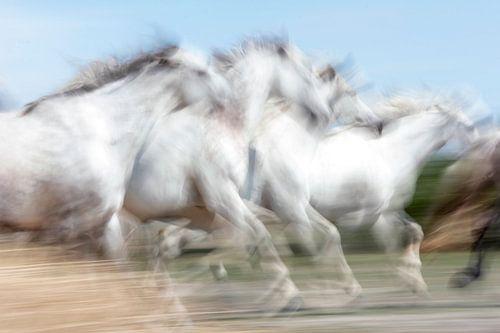Witte paarden uit Camargue in Frankrijk van Ronald Jansen