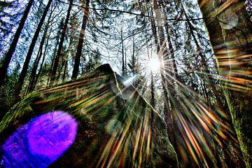 Die Sonne küsst den Wald von Roith Fotografie