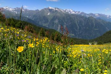 Zuid-Tirools bergpanorama van Martina Weidner