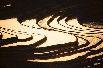 Reisbauern in Reisterrassen bei Sonnenuntergang von Rudmer Hoekstra