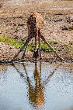 Gymnastik für einen Schluck Wasser von Mike Bot PhotographS