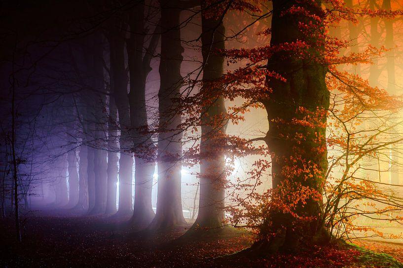 Bipolaire van Tvurk Photography