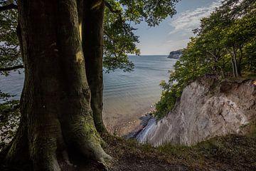 Bomen aan witte klif op Rugen eiland Duitsland van Joost Adriaanse
