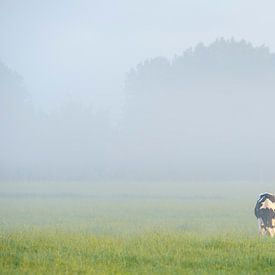 grazende koe in de wei van Arjan Keers