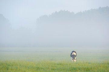grazende koe in de wei von Arjan Keers