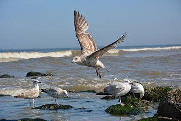 Vliegende meeuw van Michael van Eijk
