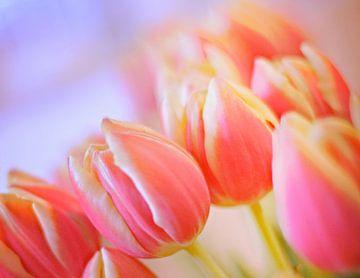 Rosen-Tulpen von Marianna Pobedimova