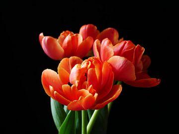 Tulpenstrauss auf schwarzem Hintergrund von Birdy May