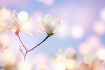 witte magnolia van Dörte Stiller