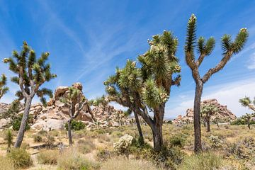 Wunderschöner Joshua Tree National Park von Melanie Viola