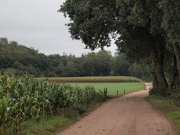 Landweg (beek & bultpad) van Annie Lausberg-Pater