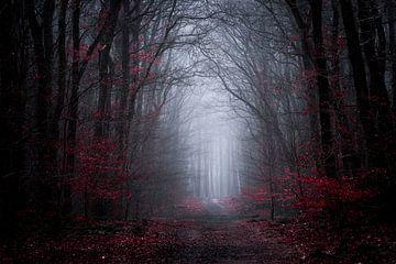 Symphonie sombre sur Tvurk Photography