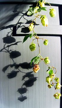 hopplant (2) van joyce kool