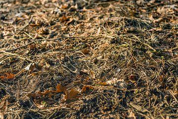 Close-up van een stukje bosgrond in herfstkleuren van Ruud Morijn