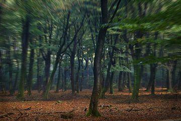 Magic Forrest van Iwan de Brabander