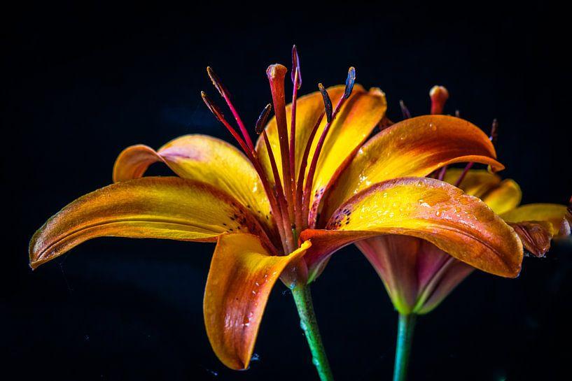 Lelie oranje-geel van Rietje Bulthuis
