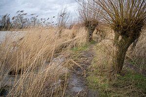 kronkelpaadje Biesbosch van Eugene Winthagen