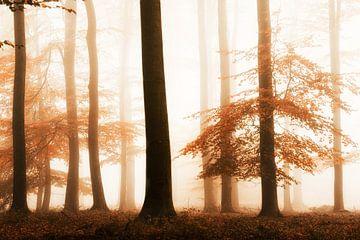 Schatten des Herbstes von