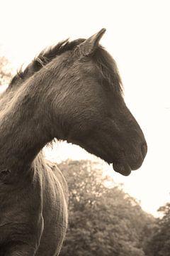 Sepia paard van Daan Ruijter