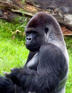 gorilla man  van