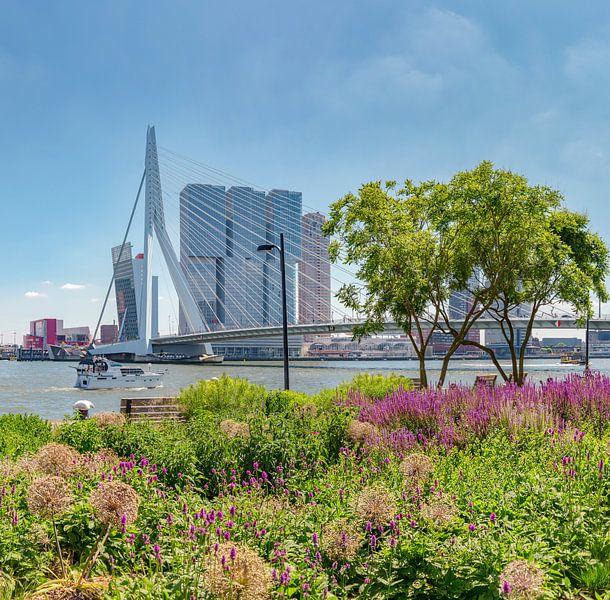 De Erasmusbrug, moderne architectuur Kop van Zuid, Rotterdam, Zuid-Holland, Nederland van Rene van der Meer