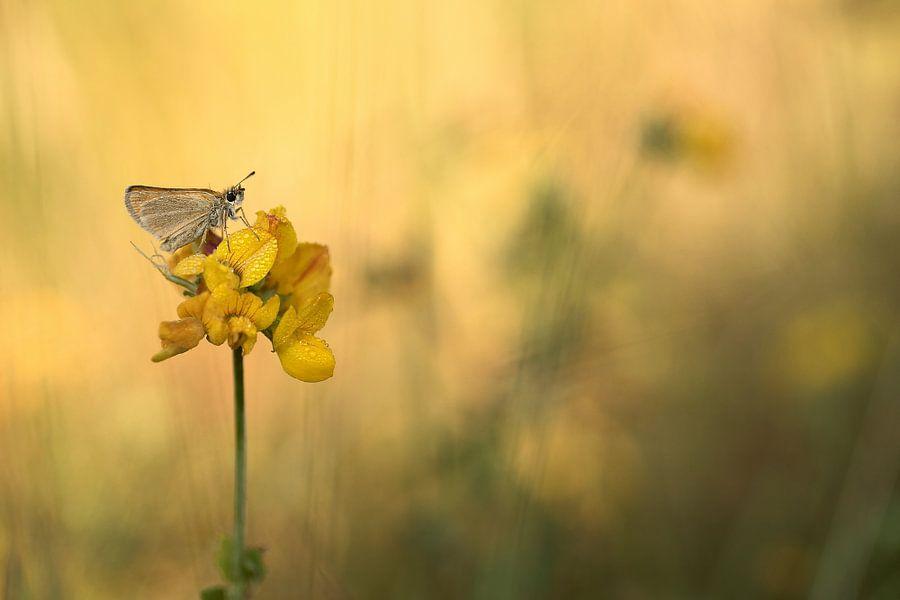 Vlinder op rolklaver van Gonnie van de Schans