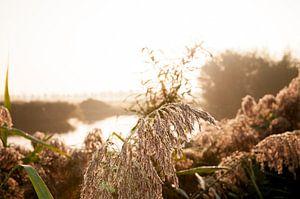 Vochtig gras in de ochtendzon