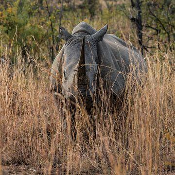 Neushoorn (Rhinocerotidae): Ik zie jou! von Rob Smit