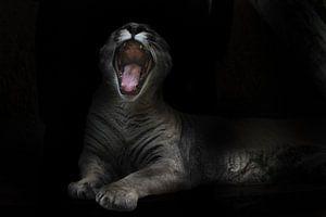 Ein gefräßiges Pumaweibchen öffnet mit einem Schrei ein riesiges, zahnbewehrtes Maul in der nächtlic von Michael Semenov