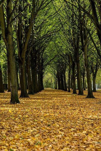 Herfst landschap van Menno Schaefer