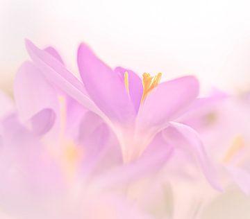 Bloemenfeest in de lente van Mike Bot PhotographS