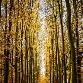 Herfst in het bos van Ipo Reinhold