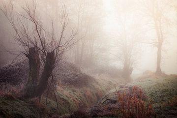 Oude wilgen bij de Luysmolen Bocholt van Peschen Photography