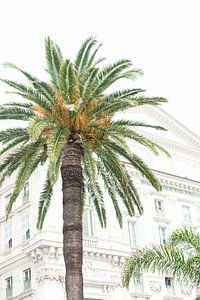 Palmboom in Nice van