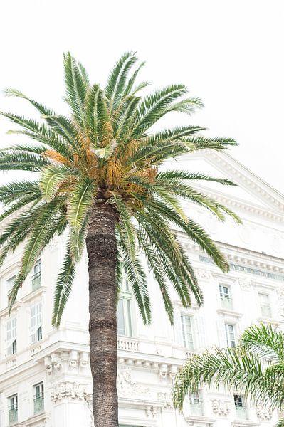 Palmboom in Nice van Lisenka l' Ami