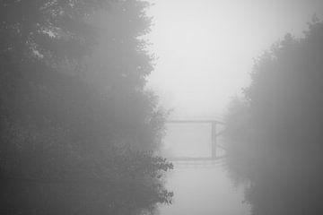 Natuur in de mist van