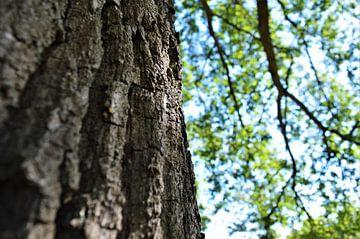 Een boom met kleuren van DoDiLa Foto's