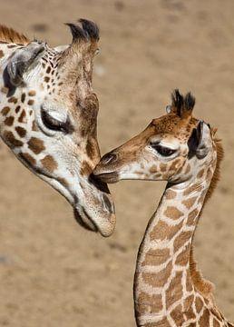 giraffen van anja voorn