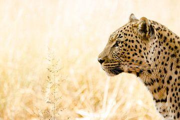 Portrait d'un léopard en Namibie sur Kirstin Kraaijveld