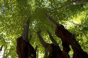 Bomen vanaf de grond van Tobias Van der ploeg