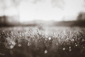Zwart/wit Gras, Druppels von Wilma Meurs