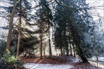 Zonnestralen door de bomen van Willy Sybesma