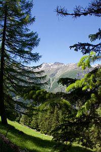 Het leven in de Zwitserse bergen op een zomerse dag van