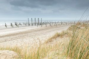 Strand bij Palendorp Petten