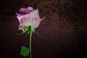 Stilleven met rose roos
