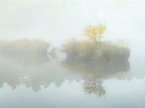 Eilandje met boom in de mist.